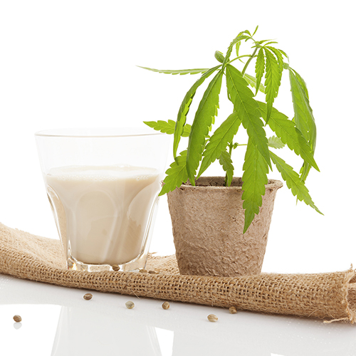 Hemp and the food industry